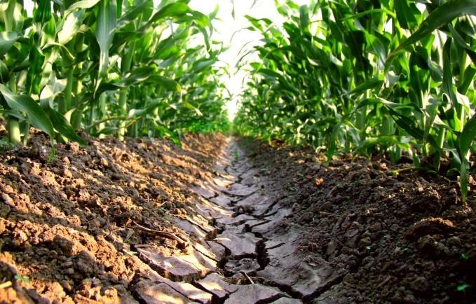 Sales del suelo su importancia y manejo agrichem for Suelos para jardines fotos