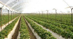 Agricultura protegida, otra manera de cultivar