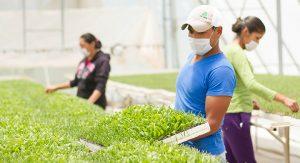 Agricultura sustentable: una buena práctica agrícola y social