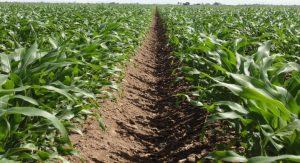 El ciclo agrícola, ¿cuándo se siembra y cuándo se cosecha?