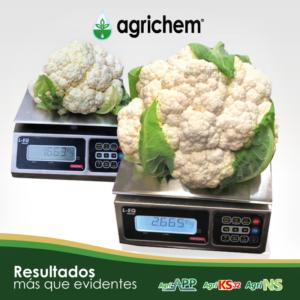 Productos de Agrichem en el cultivo de Brasicas
