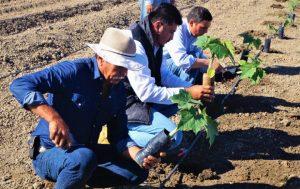 La producción en zonas áridas de México