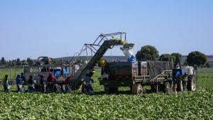 México y Emiratos Árabes buscan ampliar intercambio comercial agroalimentario