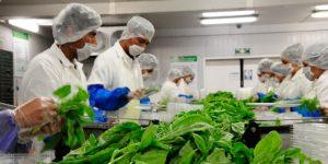 Pública Agricultura Reglas de Operación del Programa de Sanidad e Inocuidad Agroalimentaria 2020